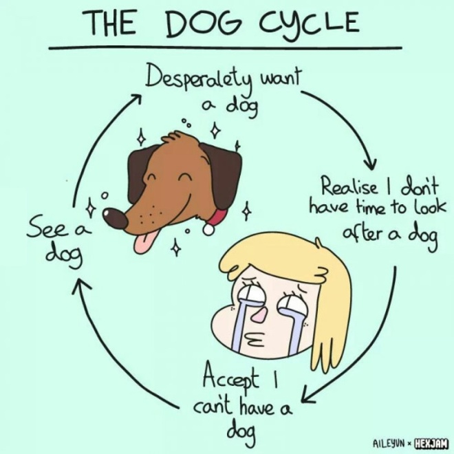 cycle-of-wanting-a-dog