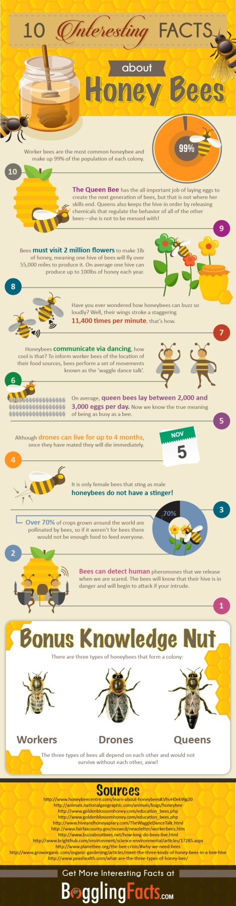 Honey Bees_Interesting Facts